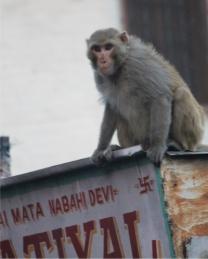 Monkey_Top