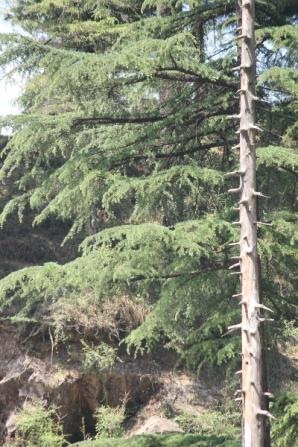 Tree bare branch