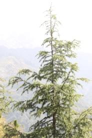 Tree shoot