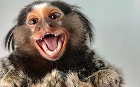 Monkey2