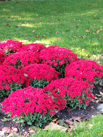 Ed- BC flowers